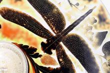 Dragonfly Mosaic platter